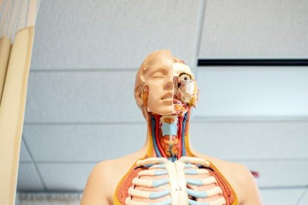 AnatomyX patwillisedu.com